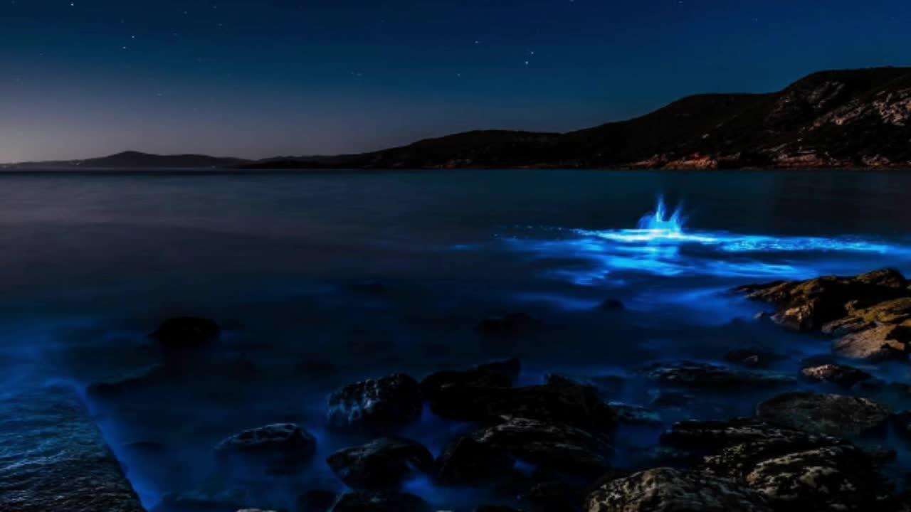 Vid 201 O Tasmanie La Bioluminescence Un Ph 233 Nom 232 Ne
