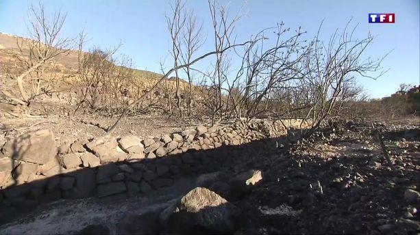 Aude : 1000 hectares de garrigue partent en fumée