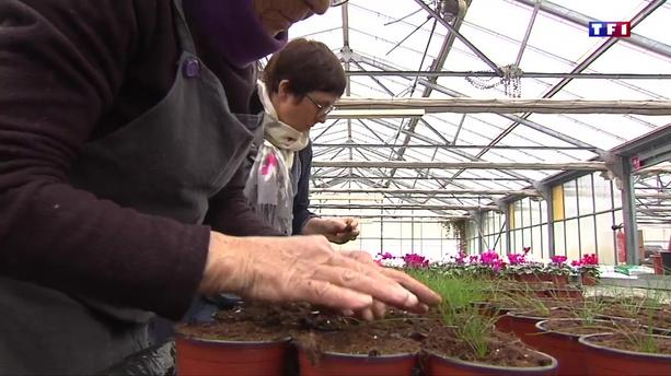 Effervescence dans les jardineries