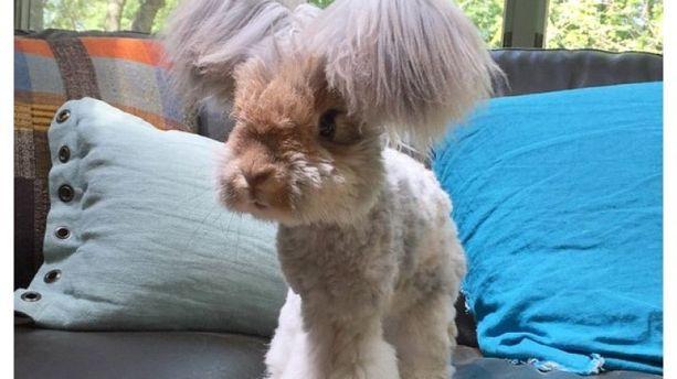 L'instant meugnon – Wally, le lapin peluche star d'Instagram