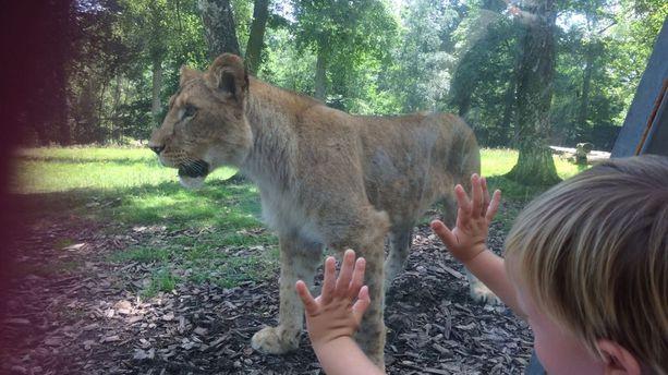 Thoiry : un safari plein de surprises !