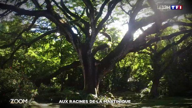Zoom sur les racines de la Martinique